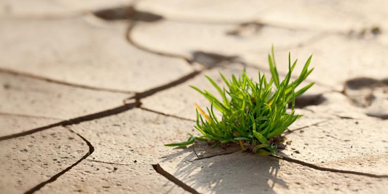 Grasbüschel bricht durch Wüstenboden