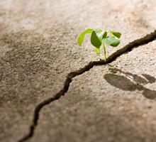 Junge Pflanze bricht durch den Asphalt